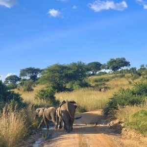 natureconnectsafarisuganda (2)
