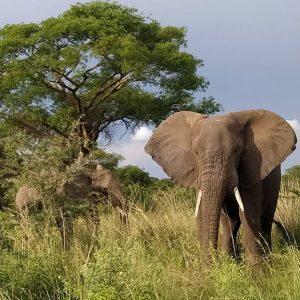 natureconnectsafarisuganda (31)